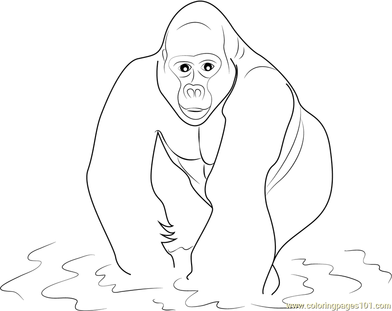Gorilla in Water Coloring Page