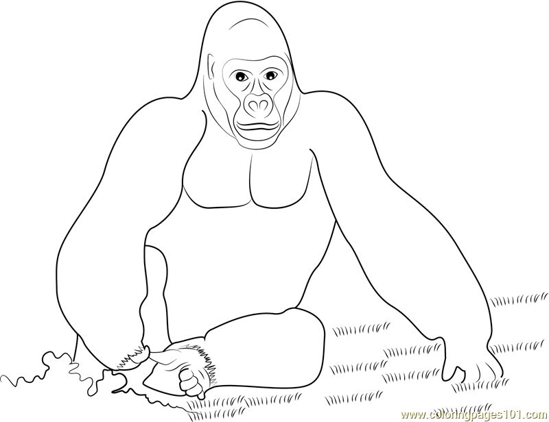 King Kong Gorilla Coloring Page Free Gorilla Coloring Pages