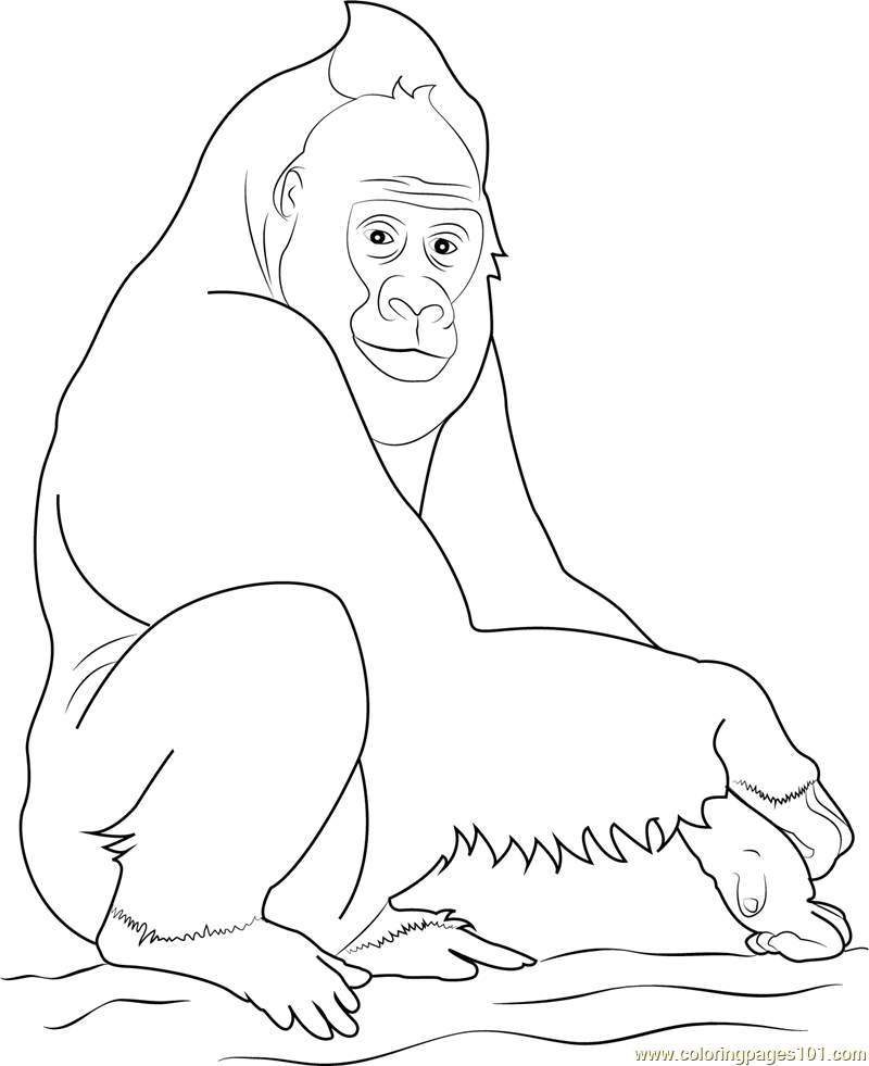 mountain gorilla coloring pages for kids more