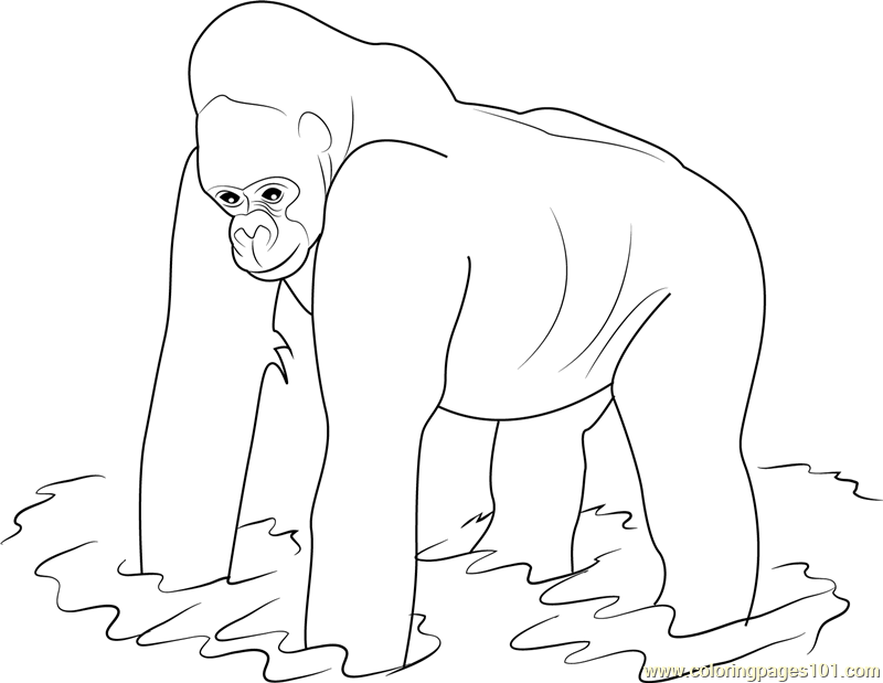 Western Lowland Gorilla Coloring Page