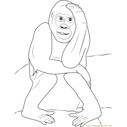 Gorilla Expression coloring page