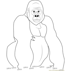 Gorilla Look at You coloring page