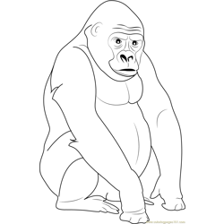 Silverback Gorilla Free Coloring Page for Kids