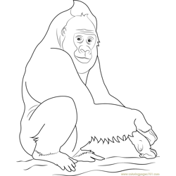 Western Gorilla Free Coloring Page for Kids