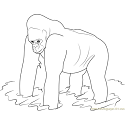Western Lowland Gorilla Free Coloring Page for Kids