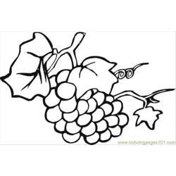 Grape 18 Coloring Page