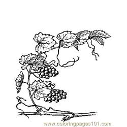 Grape (5) Free Coloring Page for Kids
