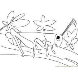 Grasshopper walking Free Coloring Page for Kids