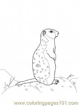 Ground squirrel stands on a rock Coloring Page