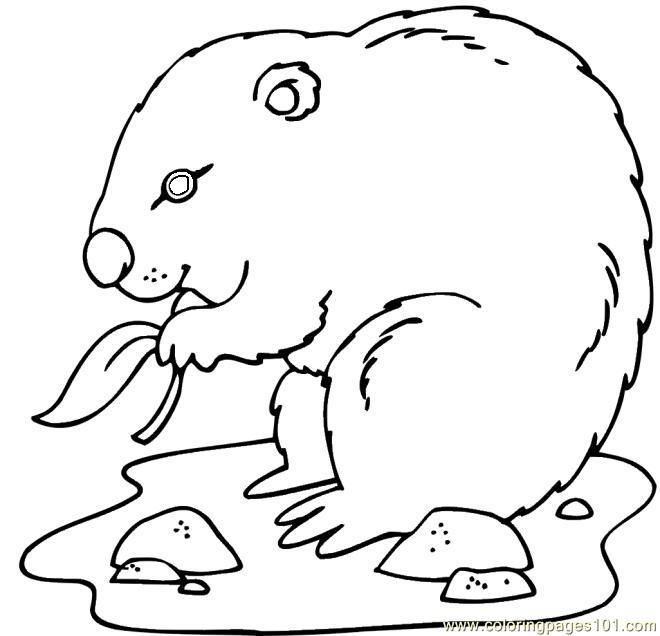groundhog eating leaf coloring page