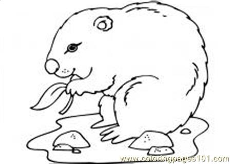 groundhog day coloring page - Groundhog Coloring Pages