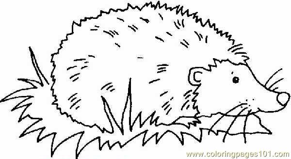 Hedgehog Coloring Page Free Hedgehog Coloring Pages