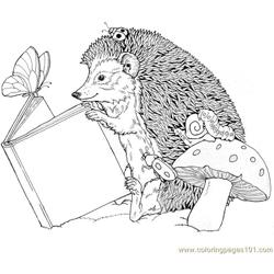Hedgehogs read book