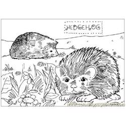 2 Hedgehogs coloring page