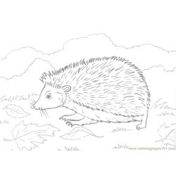 Hedgehog on grass Free Coloring Page for Kids