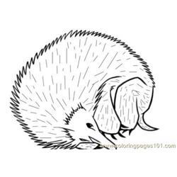 Hedgehog resting style coloring page