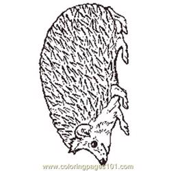The Mitten Mural Hedgehog Coloring Page