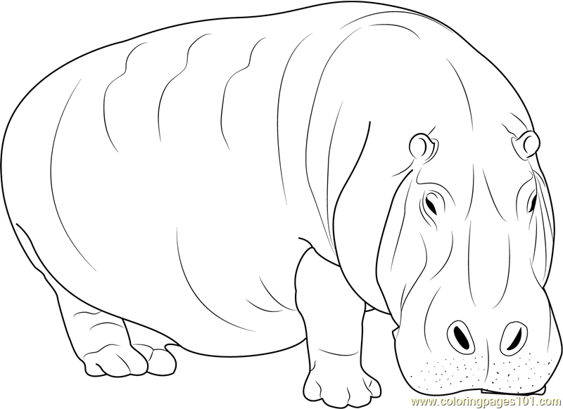 Adult Hippopotamus Coloring Page - Free Hippopotamus Coloring Pages ...