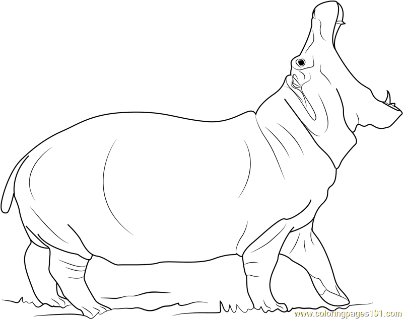Angry Hippopotamus Coloring Page Free Hippopotamus Coloring