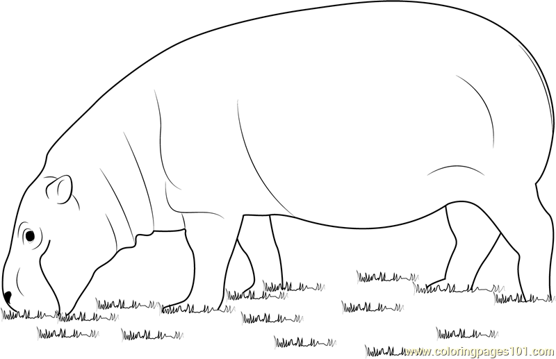 Hippopotamus Eating Grass Coloring Page