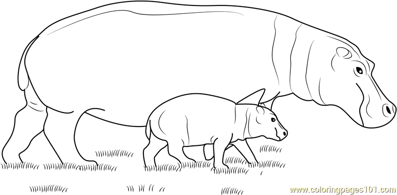 Hippopotamus With Baby Coloring Page