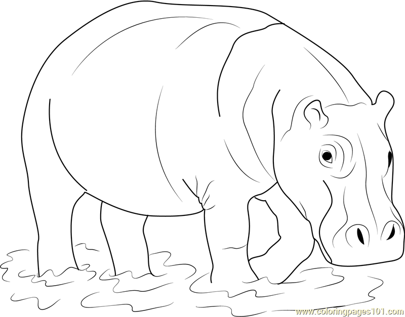 Hippopotamus in Water Coloring Page
