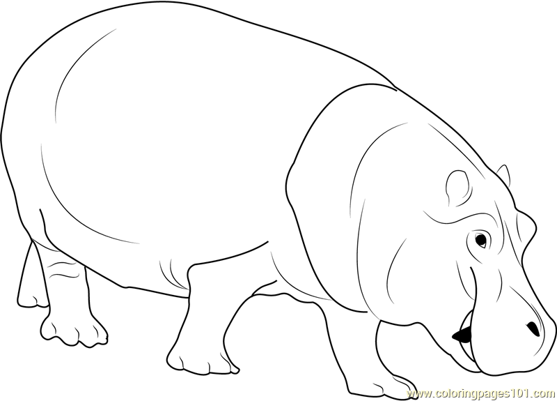 Hippopotamus Coloring Page Free Hippopotamus Coloring Pages
