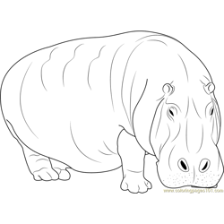 Adult Hippopotamus coloring page