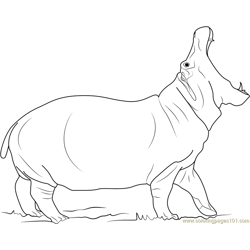 Angry Hippopotamus coloring page