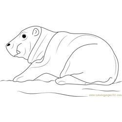 Hippopotamus Baby Free Coloring Page for Kids