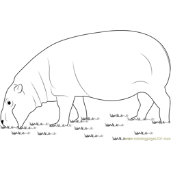 Hippopotamus Eating Grass Free Coloring Page for Kids