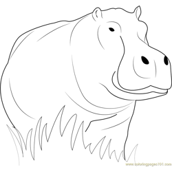 Hippopotamus Loking Free Coloring Page for Kids