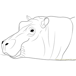 Hippopotamus amphibius Free Coloring Page for Kids