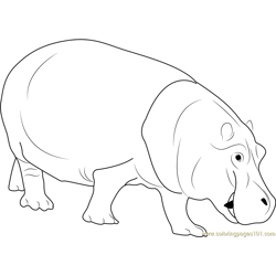 Hippopotamus Free Coloring Page for Kids