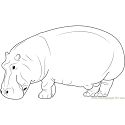 Wild Hippopotamus Free Coloring Page for Kids