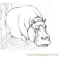 Hippo Free Coloring Page for Kids