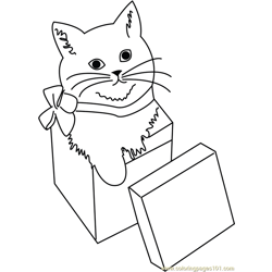 Cat in Giftbox