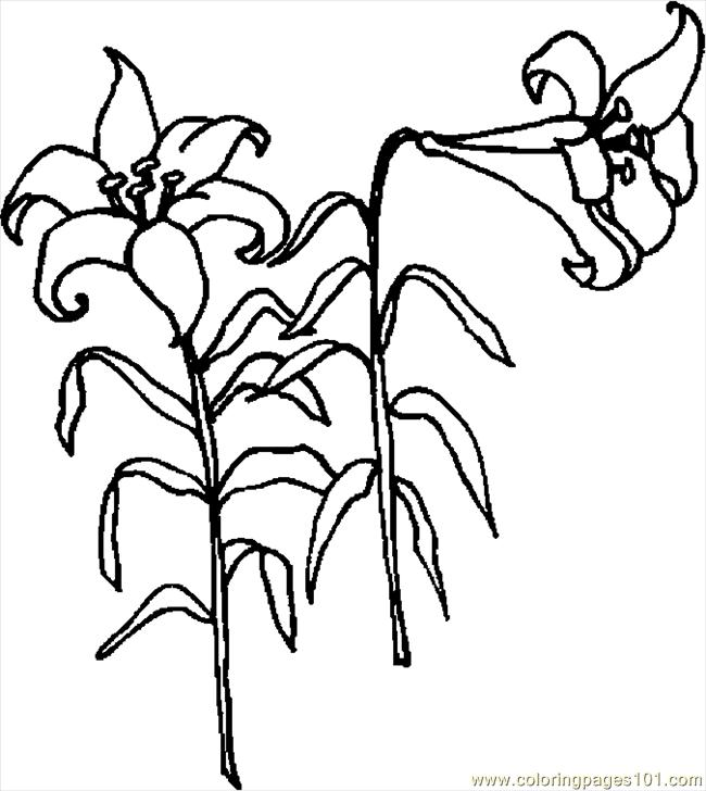 easter lily coloring pages - photo#25