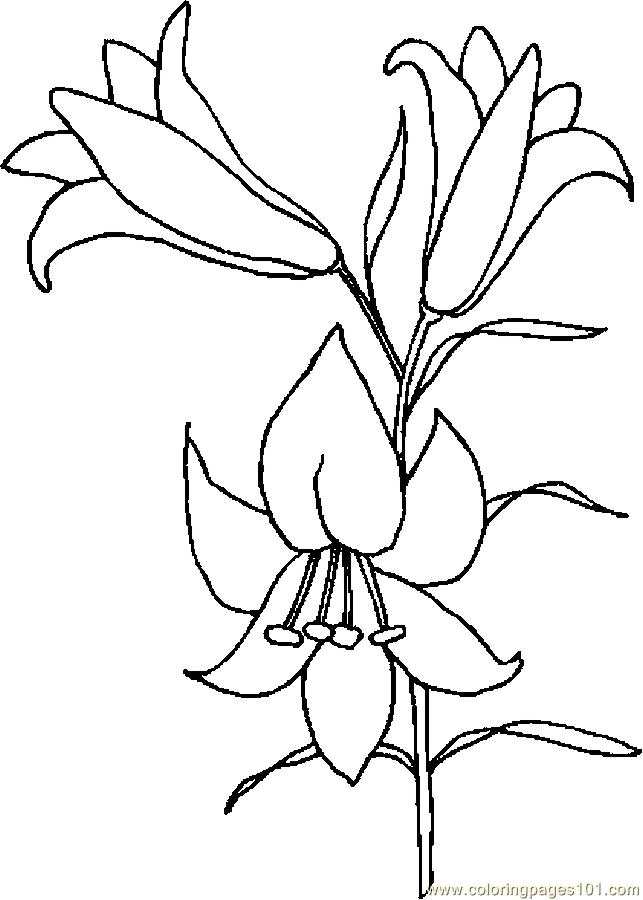 Easter Lily 6 Coloring Page Free