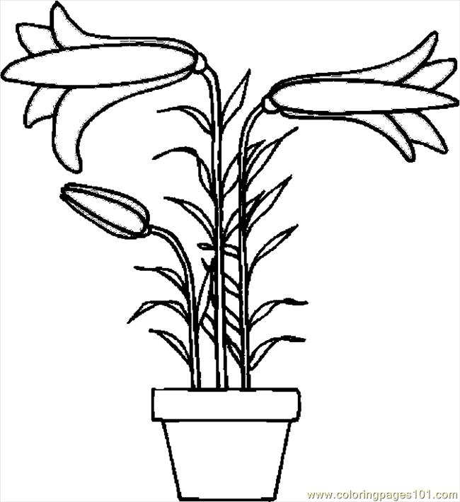 Easter Lily 8 Coloring Page