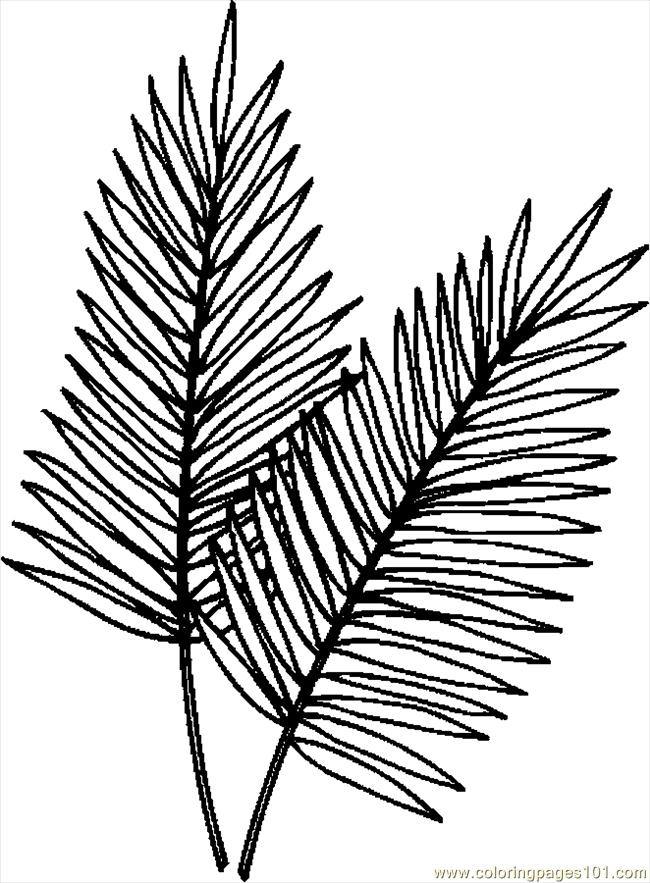 Palm Leaves Coloring Page Free