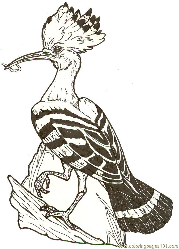 Mural Hhl Hoopoe Bird Reversed Coloring Page Free Hoopoe