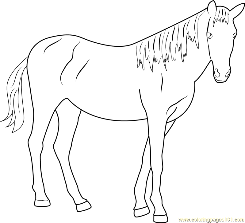 Beautiful Horse Coloring Page - Free Horse Coloring Pages ...