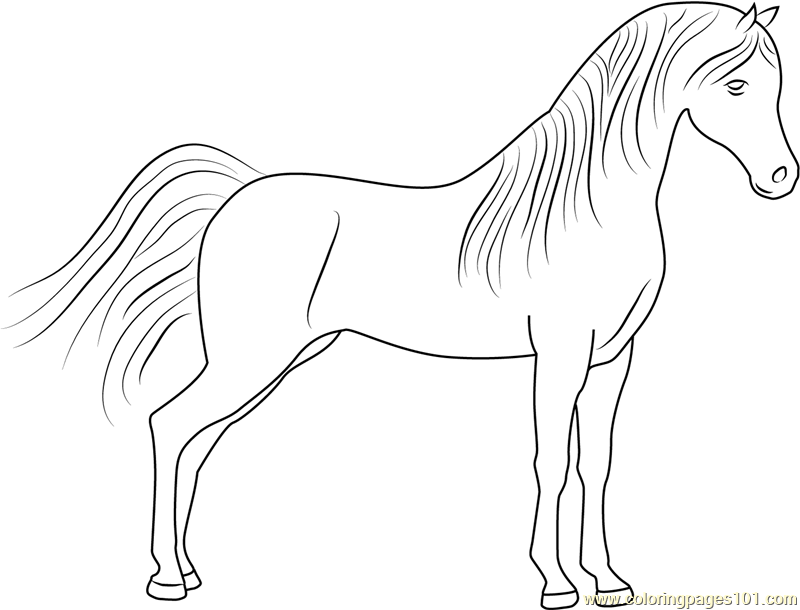 cute horse coloring pages - photo#20