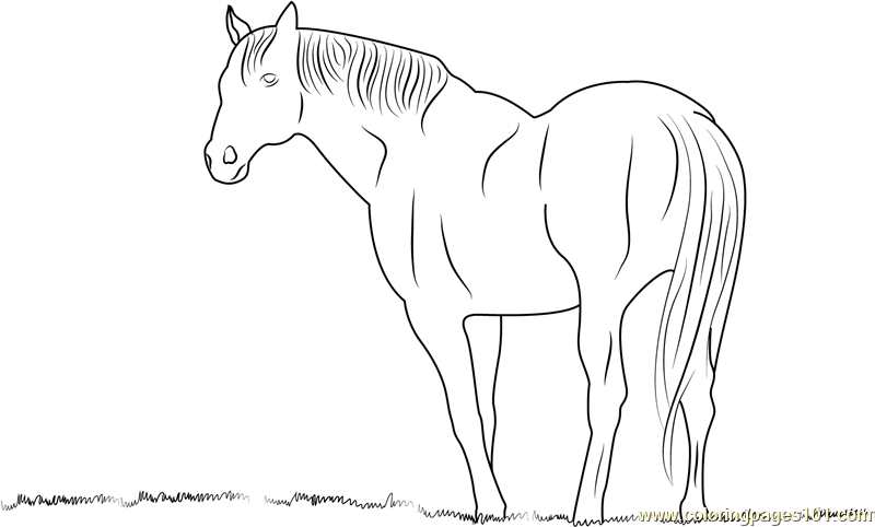 Horse looking something Coloring Page