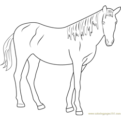 Beautiful Horse Free Coloring Page for Kids