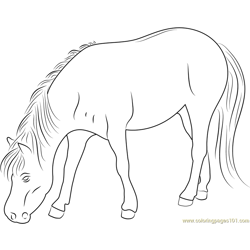 Good Looking Horse Free Coloring Page for Kids