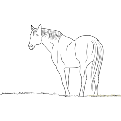 Horse looking something Free Coloring Page for Kids