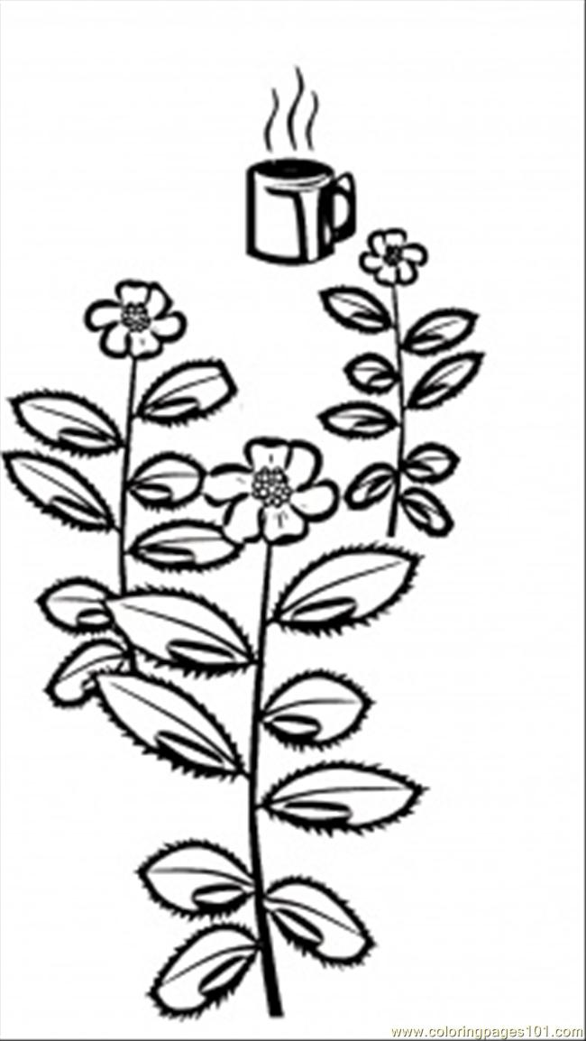 Tea Grows In India Coloring Page
