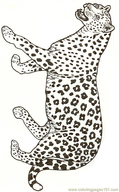 Superb Leopard Coloring Page
